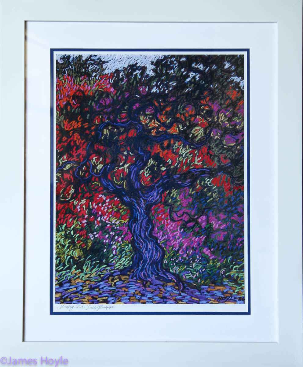 Monkeypod Tree Hanapepe - Open edition, titled and signed on photo archival paper with double mat in white frame.